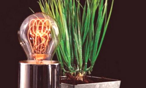 Oświetlenie Roślin Własnymi Rękami Naprawa Mieszkania