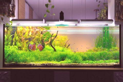 Jakie Powinno Być Oświetlenie Akwarium Roślinami Naprawa