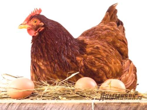 Kuřata s velkými ptáky tumblr