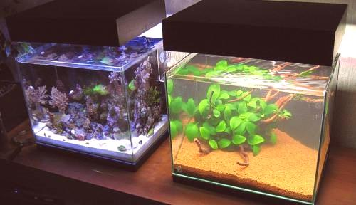 Oświetlenie Led Akwarium I Sposób Jego Prawidłowego Wyboru
